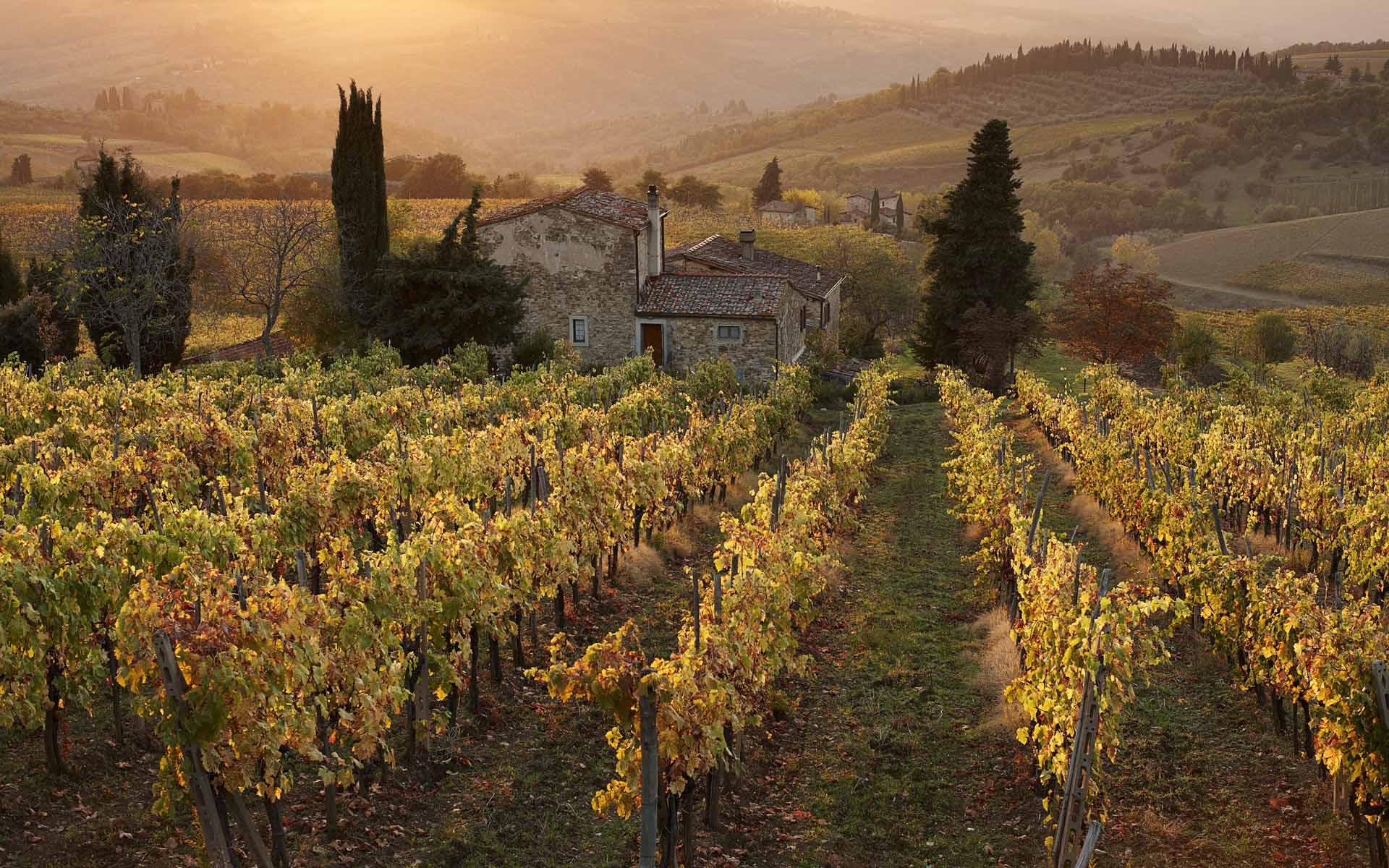 Viñedos en la Toscana
