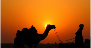 Camellos en el desierto de Thar