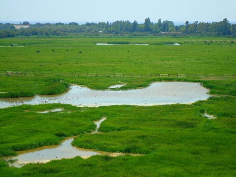 Parque Natural dels Aiguamolls de l'empordà
