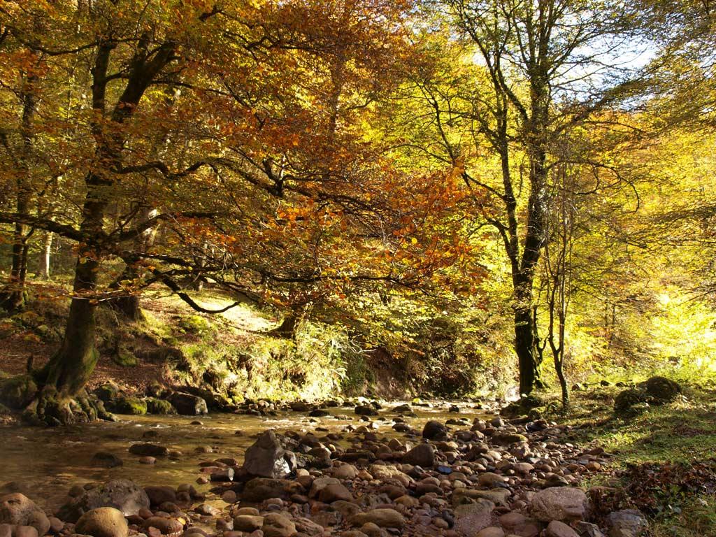 Parque natural de Saja-Besaya