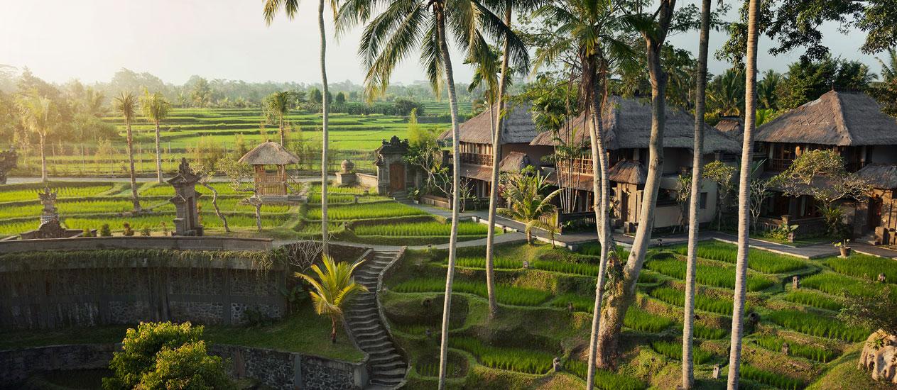 arrozales en ubud